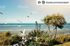 Days Like These! Royalty-Free Images available for your & Needs! More Images available in my Portfolio. See Link in Bio. Commercial Art, More Images, Royalty Free Images, New Zealand, Day, Beach, Water, Photography, Outdoor