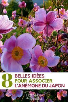 Anemone Du Japon, Geranium Vivace, Garden Entrance, Saltwater Tank, Delphinium, Green Flowers, Geraniums, Horticulture, Shrubs