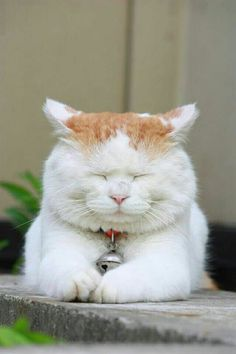 Ginger and White Cat Snoozing