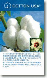 綿の種プレゼント2017