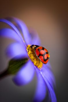 Lady Bird 2 by Xenia