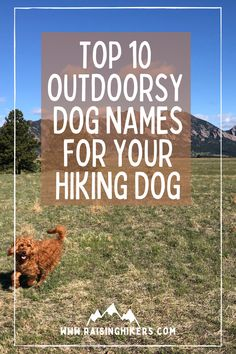 Naming a new pup? Plan to raise an outdoorsy dog who will hit the hiking trails with you? Check out these mountain lover dog names for the outdoorsy dog! We named our Labradoodle, Jasper after Jasper National Park. See the other names that were on our list! #hikingdogs #labradoodle #outdoordognames Hiking Dogs, Hiking Trails, Strong Dog Names, Mammoth Mountain, North Cascades National Park, Family Adventure, Labradoodle, Family Dogs, Cool Names