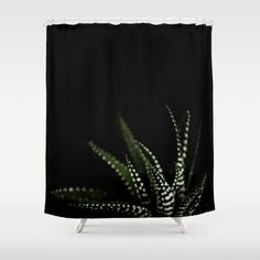Buy Shower Curtains featuring Haworthia cactus by xiari_photo. Made from 100% easy care polyester our designer shower curtains are printed in the USA and feature a 12 button-hole top for simple hanging.
