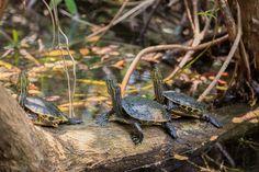 """Wish our little friends a  happy #TurtleDay by liking this picture!  Deséales a nuestros pequeños amigos un feliz #DiadelaTortuga dándole """"Me gusta"""" a esta foto!"""