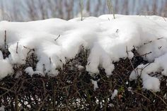 Tip of the Day: Remove Snow from Drooping Arborvitae - Don't yank, shake, or bang the branches—you can crack the frozen limbs, says Roger Cook. Survival Gear List, Off Grid Survival, Survival Project, Survival Backpack, Survival Shelter, Wilderness Survival, Survival Prepping, Survival Skills, Ice Dam Removal