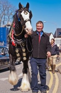 Cart Horse is a cold blood heavy weight draft horse used traditionally for pulling heavy laden carts in farming and industry