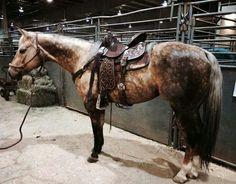 quarter horse western ranch rodeo cowboy