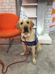 Happy birthday to our favorite puppy, Wrangler!