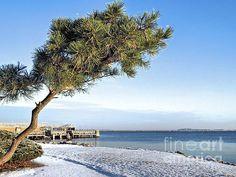 Winter Paradise - Plymouth, MA - Janice Drew