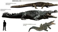 Size and scale of giant crocodiles/kin; approximations.