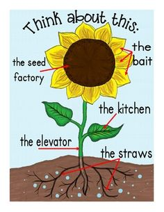 PLANTS BUNDLE: LIFE CYCLES, GRAPHIC ORGANIZERS, POSTERS AND MORE - TeachersPayTeachers.com