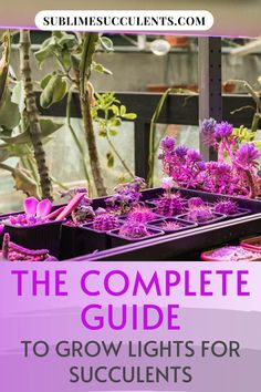 Sharing with you the complete guide to grow light for succulents. Grow lights are gonna change the way we play this succulent game. They are an easily implemented solution that increases your plant capacity. Your obsession will be enabled to a greater extent than ever before. Check this pin for full details! #succulent #growlight #succulentguide Indoor Succulents, Succulents Garden, Cactus Plants, Succulent Care, The More You Know, Types Of Plants, Grow Lights, Houseplants, Rainbow Colors