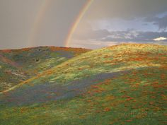 Hills with Poppies and Lupine with Double Rainbow Near Gorman, California, USA Photographie par Jim Zuckerman sur AllPosters.fr