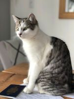 Chats A Donner Chats Et Chatons A Adopter Ville De Quebec Kijiji Kijiji Animals Cats