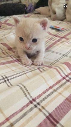 Baby Dennis http://ift.tt/2sDvsYq