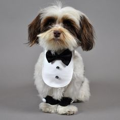 The Pet Boutique is your online source for the most stylish and functional dog clothes available. We stock clothes for dogs of all sizes. Dog Halloween Costumes, Dog Costumes, I Love Dogs, Cute Dogs, Dog Tuxedo, Small Dog Clothes, Pet Clothes, Shih Tzu Puppy, Shih Tzus