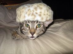 Get your FURNOGGIN HAT and feel purrrrfect