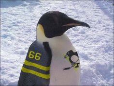 Pittsburgh Penguin