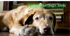 How to Support Your Dog's Joints in Old Age