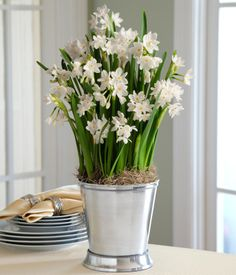 Day - pot of milk-white paperwhites from the eight maids-a-milking. Indoor Plants Online, Easy Care Indoor Plants, Indoor Flowers, Bulb Flowers, Flower Pots, Send Flowers Online, Beautiful Farm, Garden Bulbs, Language Of Flowers