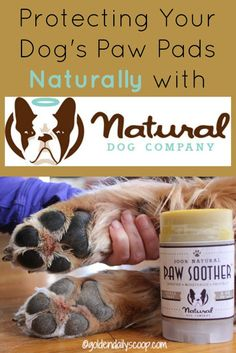 Protecting Your Dog'd Paws Naturally