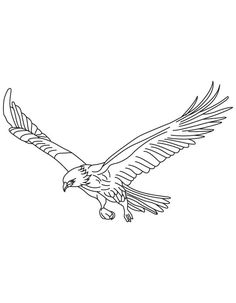 broad wings bird in flight coloring page