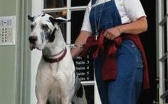 Feeding Schedule & Amounts for a Great Dane | Dog Care - The Daily Puppy