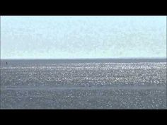 ▶ North Atlantic Right Whales off Manomet Point, Plymouth, MA - YouTube