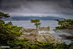 The Lone Cypress - 17-Mile Drive, California   #stock #photography #gettyimages #print #travel  