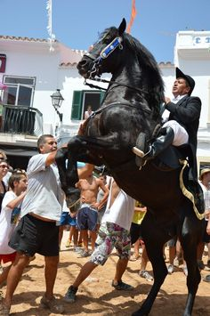 Sant Antoni, Fornells, Menorca. Menorca, Balearic Islands, Paradise Island, Holiday Travel, Ibiza, Horses, Holidays, Animals, Holiday Trip