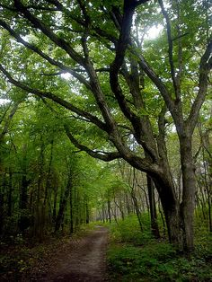 Indiana Dunes Trail, Chesterton, Indiana