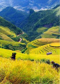 Sapa,Vietnam: Was so disappointed this didn't fit into my upcoming trip. Just means I'll have to go back
