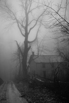Fog, tree, abandoned house.