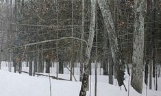 Peter Rotter    Winter Forest, 36 x 60, 2012