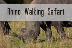 Click on the link to see the video full of animals that you can find in Uganda. And yes, it is possible to do a Walking Safari to see Rhinos! Video Full, Rhinos, Uganda, Safari, Walking, Link, Poster, Animals, Animales