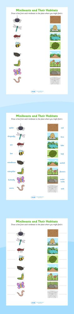 Habitats- Minibeasts and their habitats worksheets