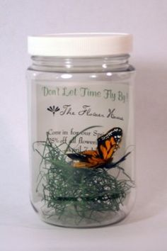 Butterfly or Bugs in a Jar Invitation by socialcircles on Etsy, $6.75