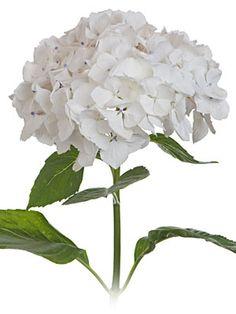White Hydrangea. Also, Comes in blue, green, purple, pink.