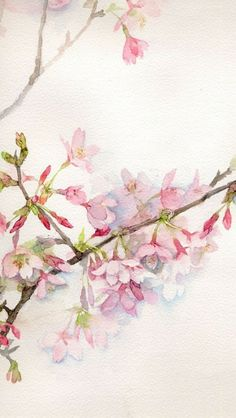Beautiful cherry blossom. I can't make out the artist's name. Japanese.