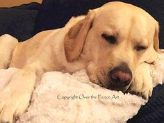 YELLOW LABRADOR NAPS Posterize Style Photo Greeting Card