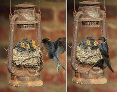 20 птици, грижещи се за своите мъничета - Блог [lapichki.com - Сайт за вашите домашни любимци]