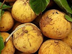 There was 12 fruit names starting with S that I can found and they are Safou fruit, Salak fruit, Santol fruit, Sapodilla fruit, Soncoya fruit Fruits Name List, Fruit List, Names Starting With S, Fruit Names, Fruit Picture, Fruits Images, Mango, Vegetables, Eat