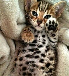 I'm not a cat person, in fact I'm allergic, but I would definitely own a cat like this in a heartbeat!