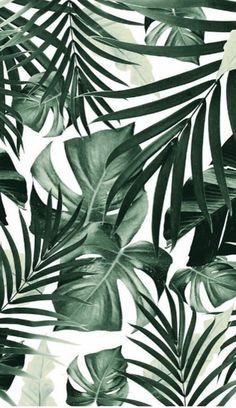 Tropical Jungle Leaves Pattern Window Curtains to wallpaper around windows Art Prints Leaves Wallpaper Iphone, Plant Wallpaper, Tropical Wallpaper, Screen Wallpaper, Pattern Wallpaper Iphone, Windows Wallpaper, Wallpaper Patterns, Iphone Wallpaper Jungle, Banana Leaves Wallpaper