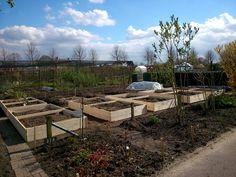 Beautiful springday to work on placement of wooden frames around raised vegetable beds.  Mooie dag om de houten bakken te plaatsen voor de verhoogde groentebedden