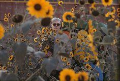 vintage everyday: Warhol Flowers, 1964