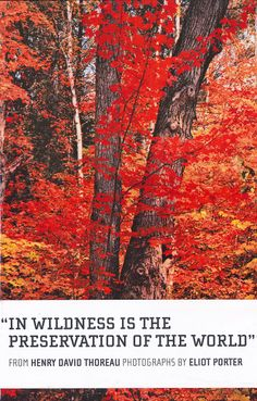 In Wilderness is the Preservation of the World, Artist-Related, Books - The Museum Shop of The Art Institute of Chicago
