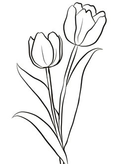 Two Tulips Coloring Page From Tulip Category Select 26267 Printable Crafts Of Cartoons