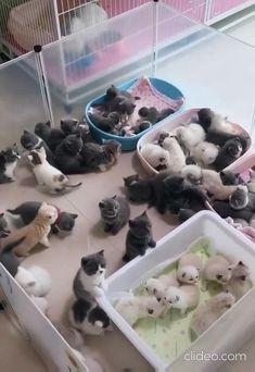 Kittens everywhere. - cute cats - Kittens everywhere. – cute cats Kittens everywhere. – cute cats Kittens everywhere. – cute ca - Cute Baby Cats, Cute Little Animals, Cute Cats And Kittens, Cute Funny Animals, Kittens Cutest, Funny Kittens, Black Kittens, Ragdoll Kittens, Kitty Cats