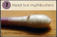 Head lice mythbusters - know your lice so you can get rid of them! #parentingtips #health